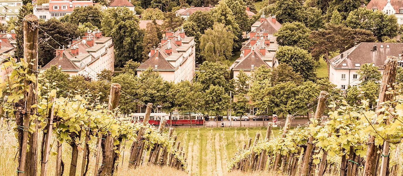 Weingarten und Straßenbahn im 17. Bezirk
