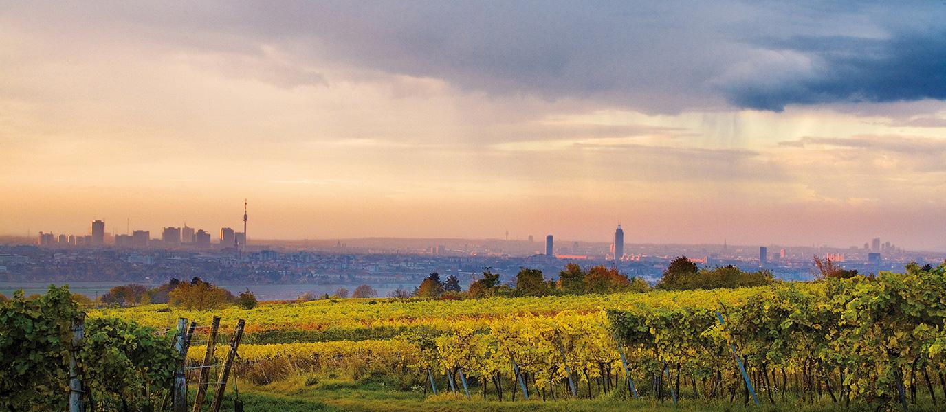 Wien-Panorama mit Weingärten
