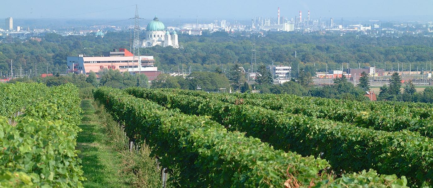 Weingarten und Zentralfriedhof